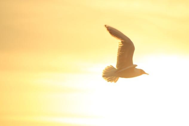 bird-1853209_1920