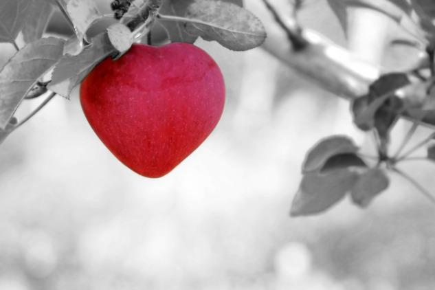heart-begin-again