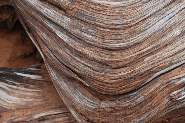 wood grain love who you are studio